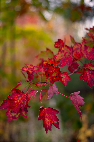20111019_Autumn07.png