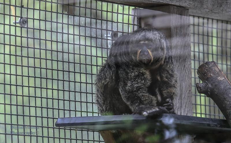 2016-07-17 Fort Wayne Zoo 779LR.jpg