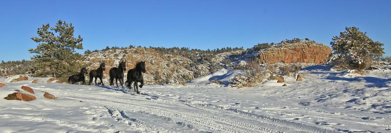 snowhorsesB (5 of 15).jpg