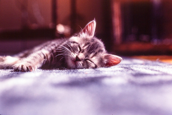 1984_January-Kitten Whiskers