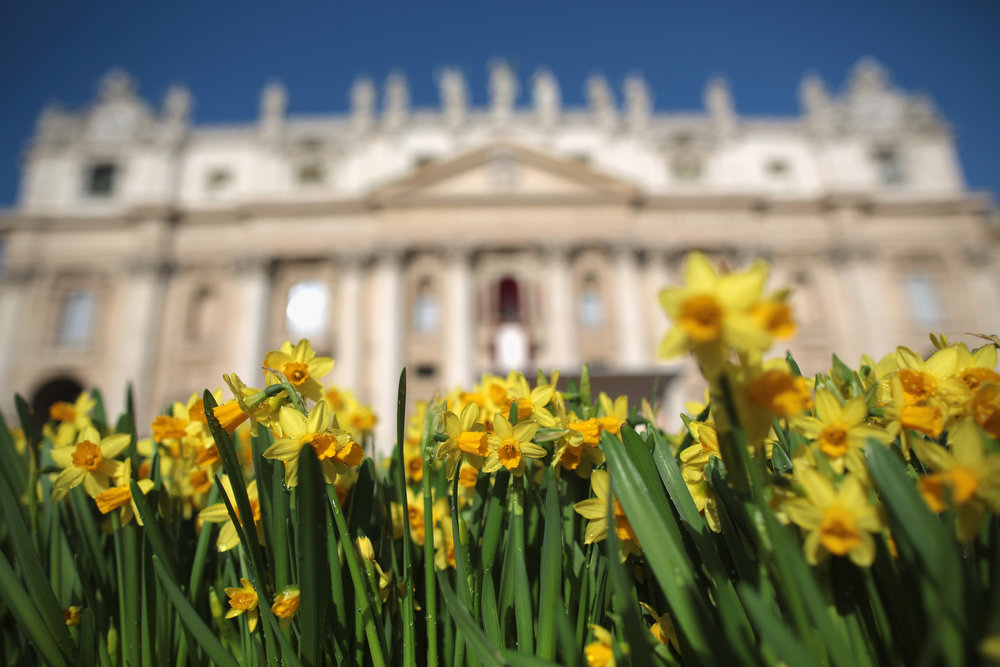. Daffodils in front of St. Peter\'s Basilica as final preparations are made before Pope Francis delivers his first \'Urbi et Orbi\' blessing from the balcony of the Basilica during Easter Mass on March 31, 2013 in Vatican City, Vatican. Pope Francis will deliver his message to the gathered faithful from the central balcony of St. Peter\'s Basilica in St. Peter\'s Square after his first Holy week as Pontiff. (Photo by Christopher Furlong/Getty Images)