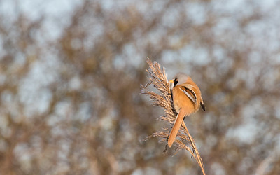 vogels oostvoorne