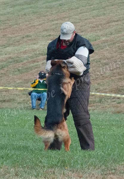 Sieger Working Dogs/GSDCA 2015 National Specialty