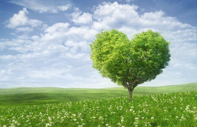 472253_valentines-day_love_romance_heart_tree_green_5000x3231_(www.GdeFon.ru).jpg