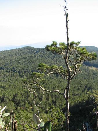 Sierra de Baoruco, D.R., Black-capped Petrel nesting grounds, November 17-18 2006
