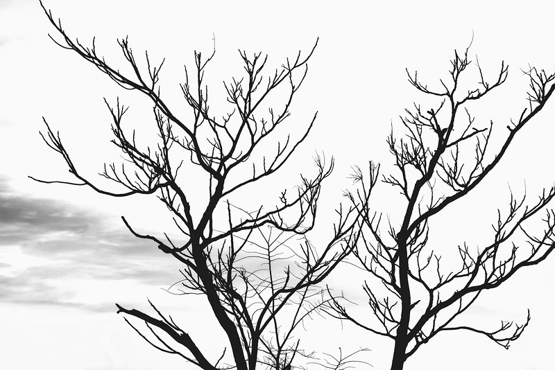 Two Trees and a Cloud