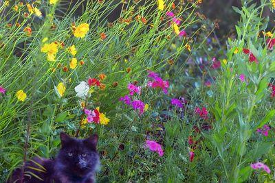 Flowers around the charleston area
