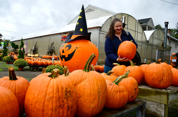 10/13/2018 Mike Orazzi | Staff Diana Therrien looks over pumpkins during the Halloween Harvest Festival held at the Wojtusik Nursery on Terryville Avenue in Bristol Saturday. The festival continues weekends through October 28th.