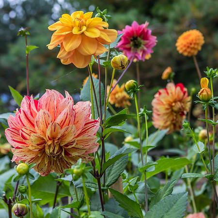 Joanna's Fall Garden 09.29.18