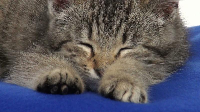 kitten_546_04.mov