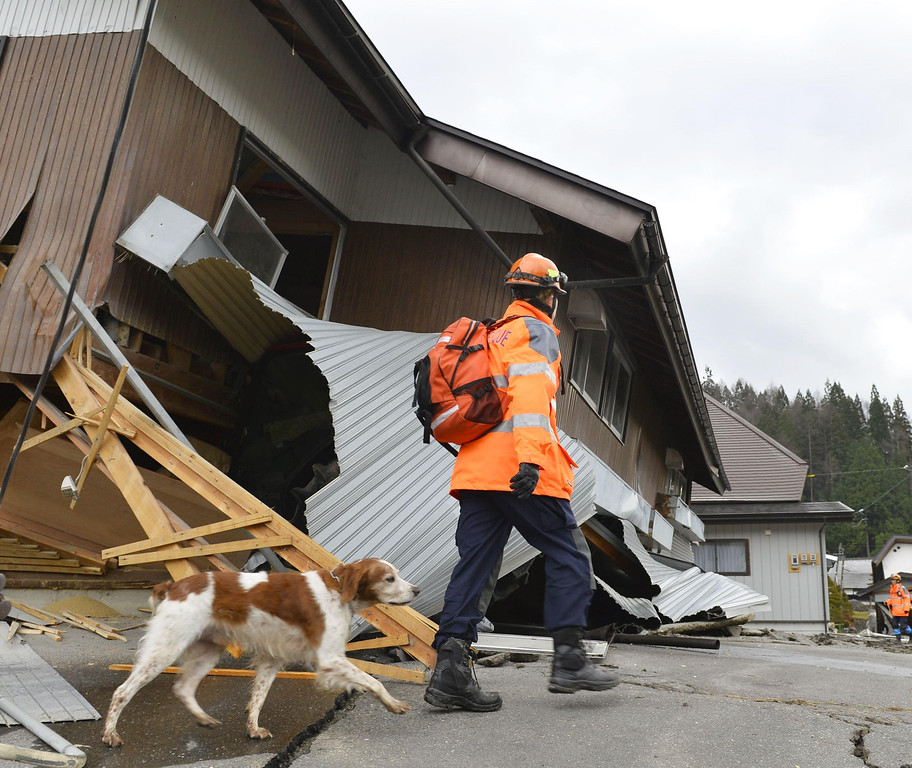 . A rescuer with a sniffer dog examines a damaged house Sunday, Nov. 23, 2014 after a strong earthquake hit Hakuba, Nagano prefecture, central Japan, Saturday night. More than 20 people have been hurt after the magnitude-6.8 earthquake shook the mountainous area that hosted the 1998 winter Olympics. (AP Photo/Kyodo News)