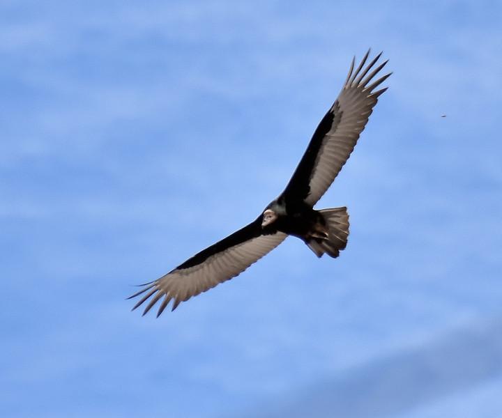 2016 valdivia condor? 1.jpg