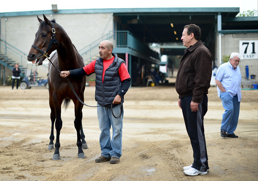 . Rafael Orozco, Barn 71 foreman, brings out Tiz a Minister Thursday, April 4, 2013 at Hollywood Park in Inglewood for trainer Paul Aguirre and owner Steve Young. Tiz a Minister is expected to do well in the Santa Anita Derby Saturday. (SGVN/Staff Photo by Sarah Reingewirtz)