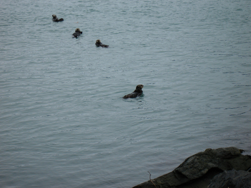 Alaska 2008 028.jpg