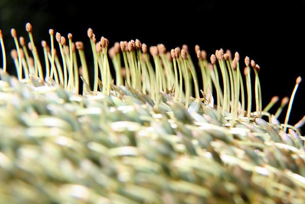 Flora-abundant