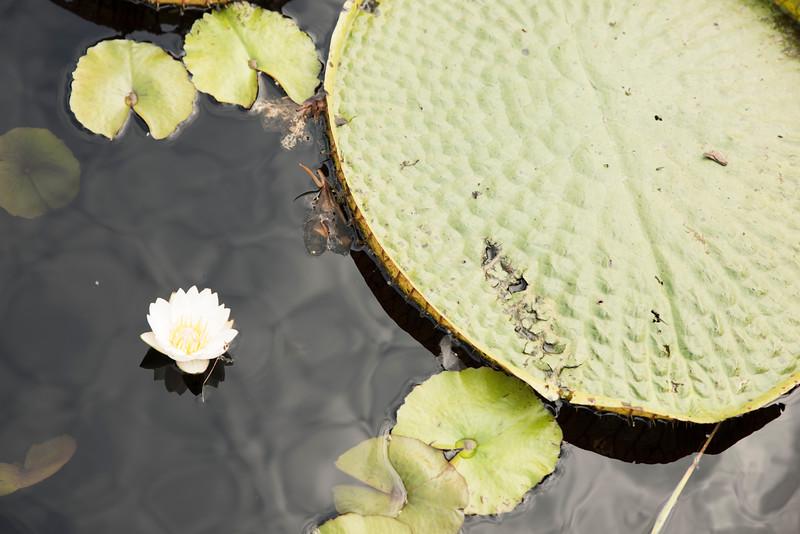Chicago Botanic Garden 050.jpg