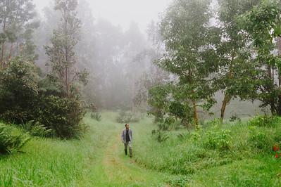 Kona Hema Forest