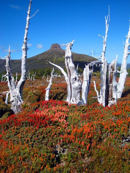 Mt Doris plateau portrait.jpg