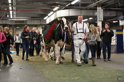 Royal Holstein Grand Champion 2018