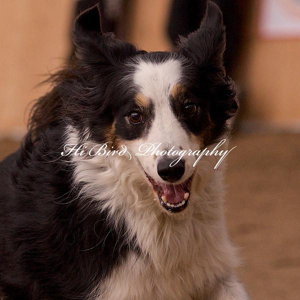 medium dog agility 1178.jpg