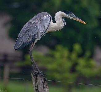 Pantanal 2018