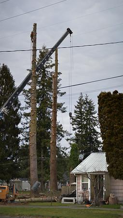 tree removal 1004 Jameson S W