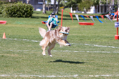 Dog Frisbee - 2009