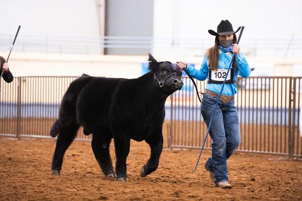 Beefbuilder Bull Ringshots