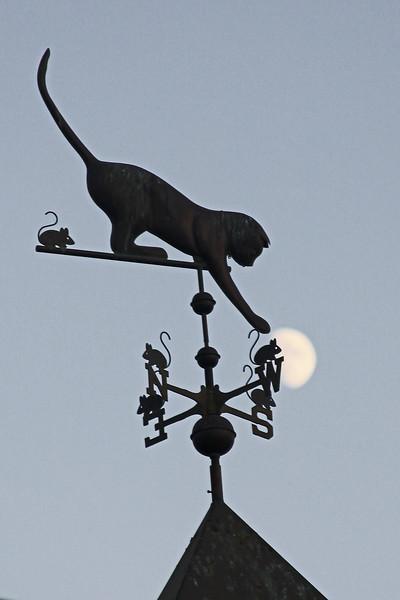 Classics, Cats and Cabernet - 2009