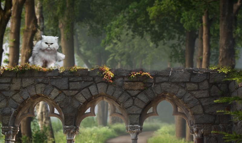 medieval-cat.jpg
