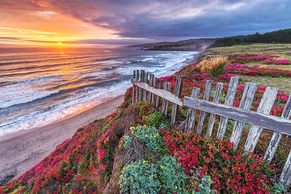 Sea Ranch - Seascapes