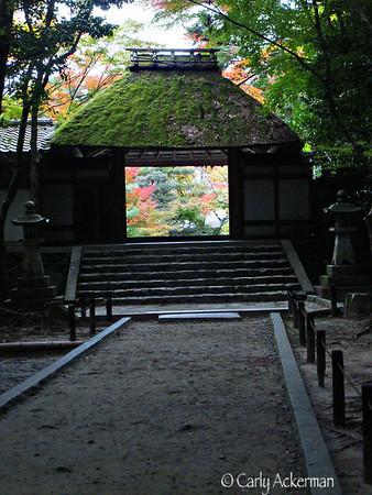 Koyo (Autumn) 秋