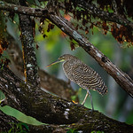 Dan Schafer's photo