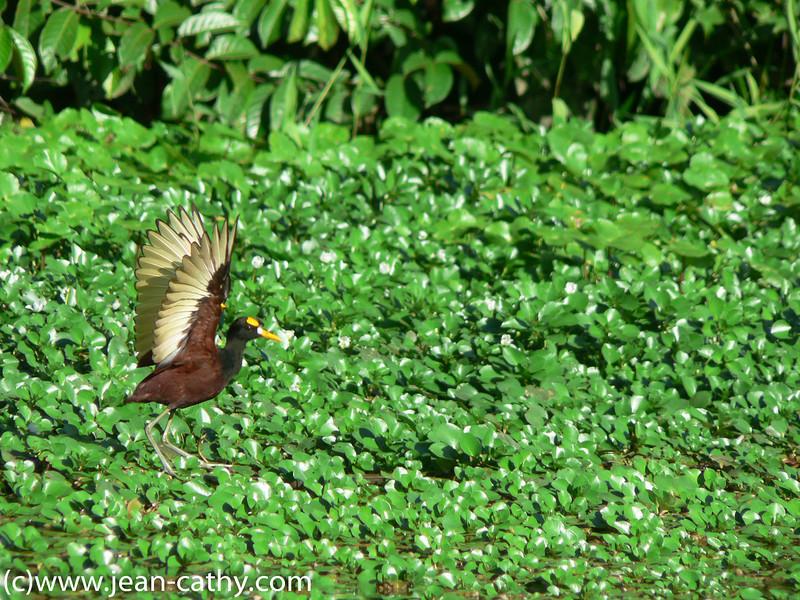 Costa Rica 2007_ (31 of 85)