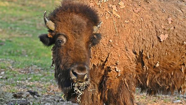 Lone Elk Park 2021-04-06