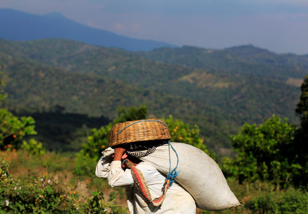 . A worker carries a sack of freshly harvested coffee beans at the Santa Adelaida coffee cooperative in La Libertad, on the outskirts of San Salvador December 10, 2012. Once a family-owned coffee plantation split under a 1980 land reform, the Santa Adelaida coffee is now a cooperative dedicated to the production of organically-grown high ground coffee, which is certified by non-governmental organization Rainforest Alliance, and exported to Germany, the U.S., Britain and Japan. The coffee plantation is currently run by a cooperative of over 150 members. Picture taken December 10, 2012. REUTERS/Ulises Rodriguez