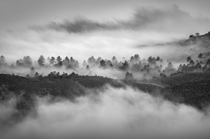 Cuyamaca Overlook Mount Laguna Rancho Cuyamaca State Park CA Frank Colosi Photography Fog Ridges Trees Black and White FULLRES.jpg