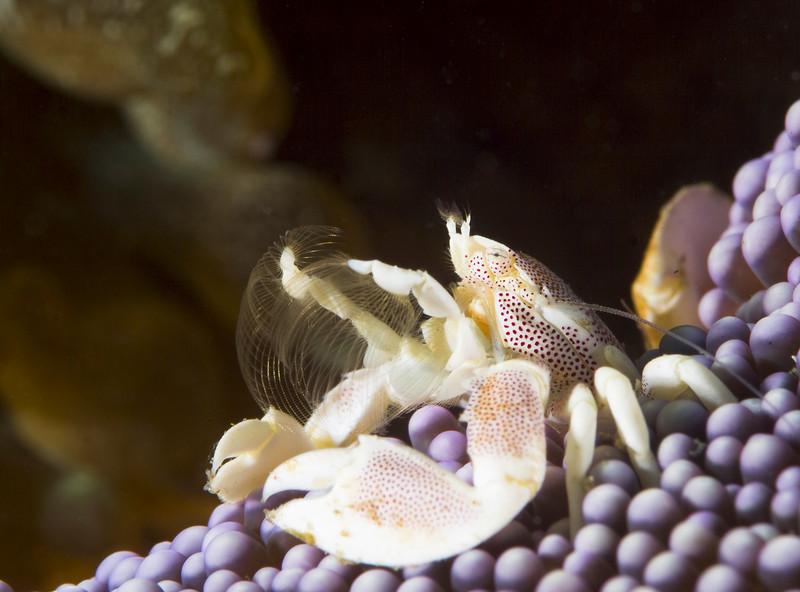 crab porcelain eating.jpg
