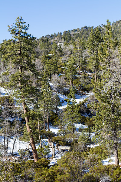 View of snowcovered mountain with trees at Lake Arrowhead - USA - California
