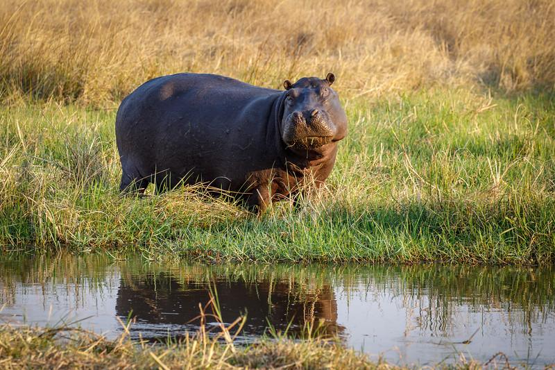 Botswana_0818_PSokol-1594-Edit.jpg