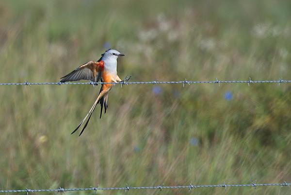 Attwater Prairie Chicken National Wildlife Refuge