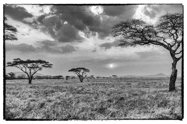 African Safari 1986