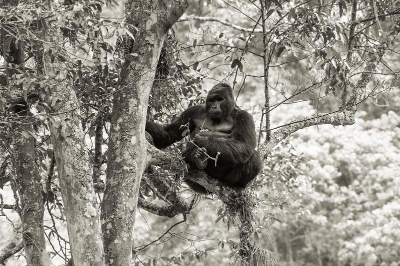 Uganda_T_Gor-1587.jpg