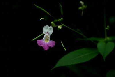 Black & Flower