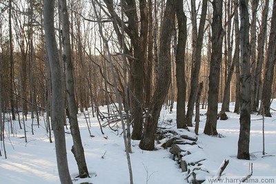 Vermont Winter 2008-2009
