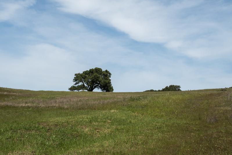 Edgewood_Park_wildflowers-38.jpg