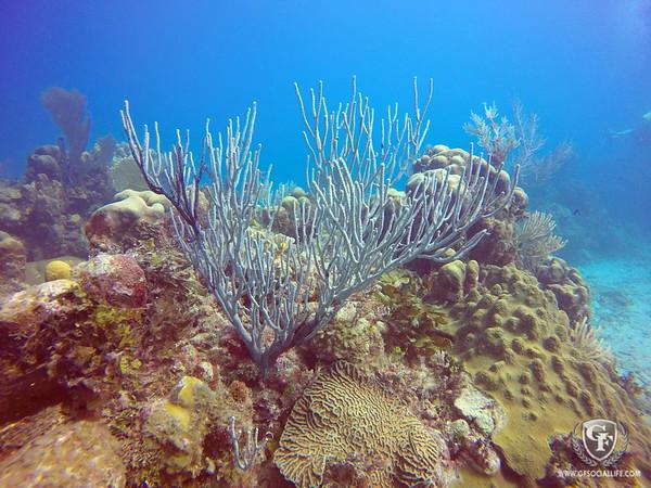 Sea Life Faves