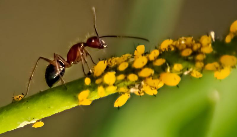 Bugs and Beetles - 11.jpg