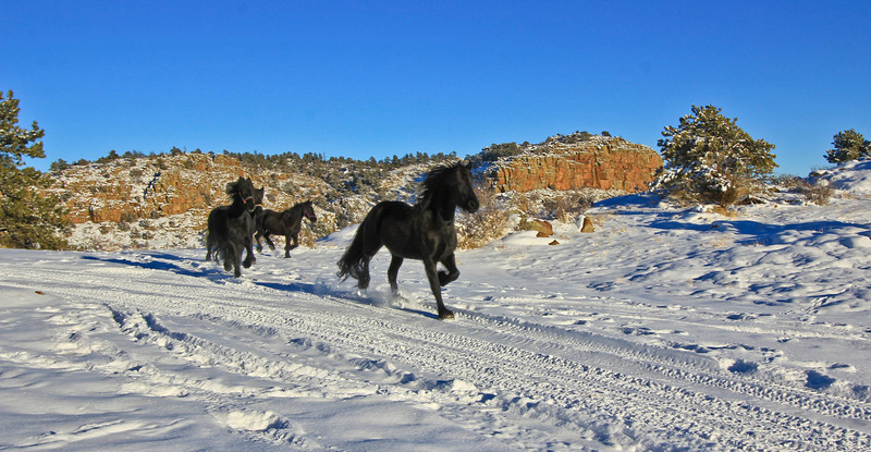 snowhorsesB (9 of 15).jpg