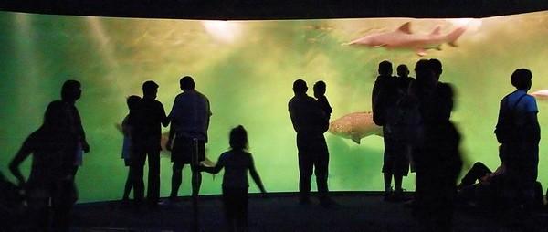 Aquarium St. Malò (France)